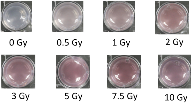 Images of hydrogels following exposure to different doses of ionizing (X-ray) radiation. Formation of gold nanoparticles renders a maroon color to the gel.